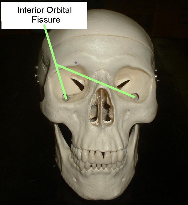 What is a fissure in anatomy